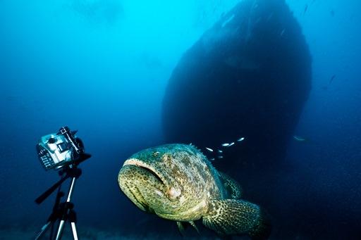Gros poisson photogénique (crédits : Jennifer Hayes, via proof.nationalgeographic.com)