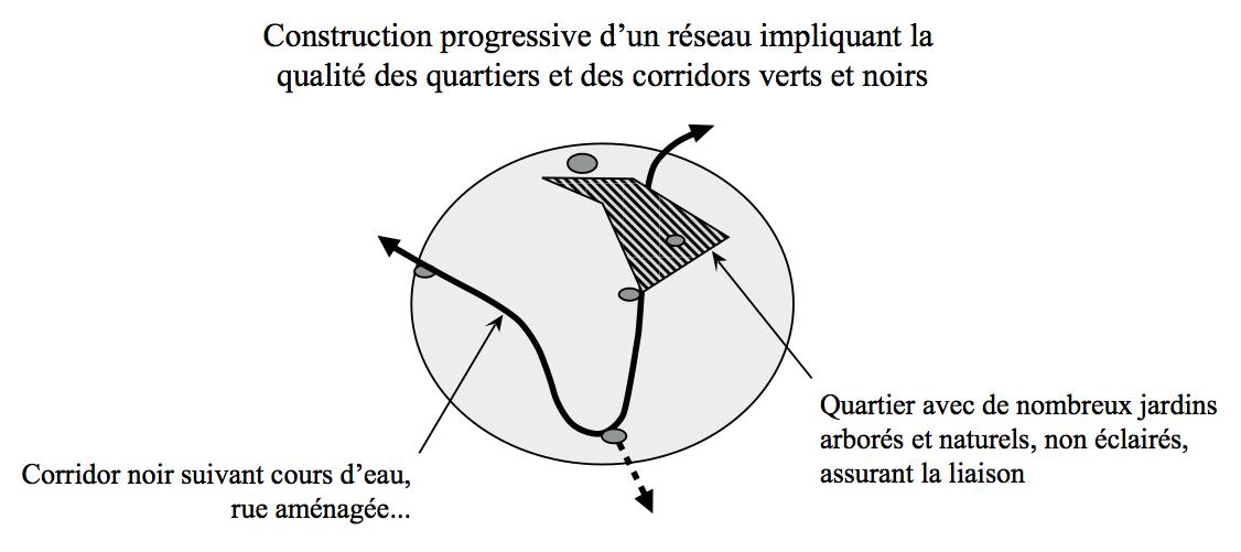 Figure 4. Développer, en milieu urbain, une Trame Verte, Bleue... et Noire. Adapté d'après Clergeau [37].
