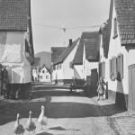 Pfalz_8