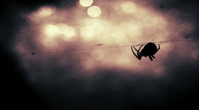 Araignée sur un fil