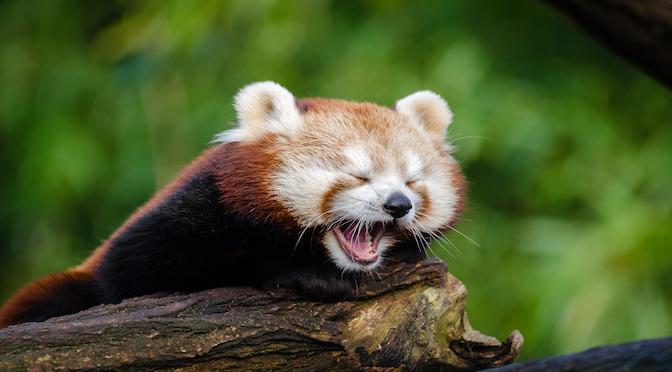 Panda baillant