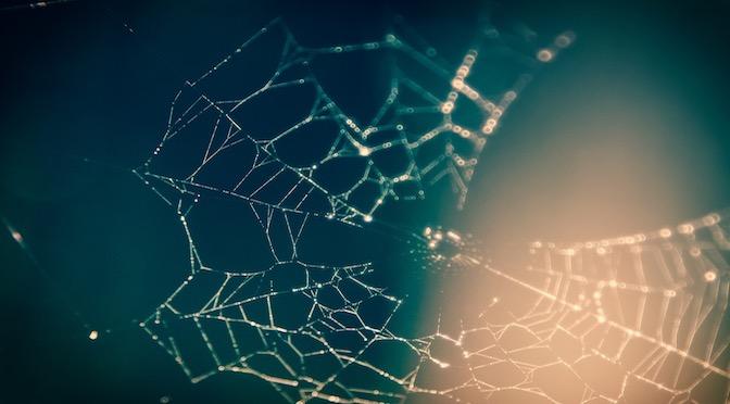Photographie en gros plan d'une toile d'araignée