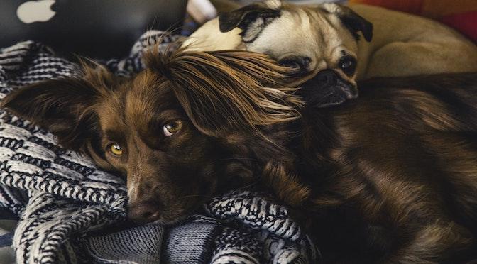 Le physionomisme canin (chronique 88)
