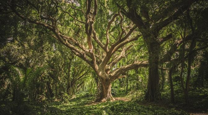 Le cerveau face à la forêt (chronique 54)