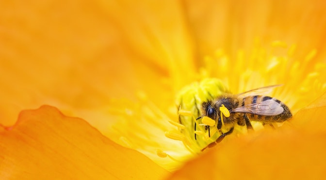 Les arithméticiennes abeilles (chronique 92)