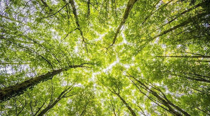 L'apaisante forêt (chronique 108)