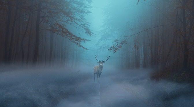 Cerf dans la brouillard