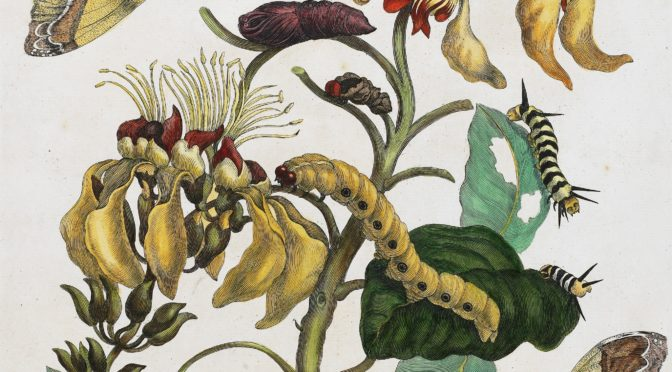 Colloque – Les métamorphoses, entre fiction et notion. Littérature et sciences (XVIe-XXIe siècle)