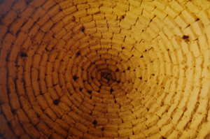 Intérieur d'une coupole en brique crue © M.-O. Rousset