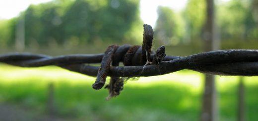 barbed_wire-boyer-flickr