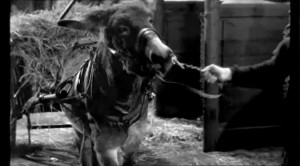 "Extrait de ""Au hasard Balthazard"" de Robert Bresson (1966) in ""Résistance Naturelle"" (01:17:39)"