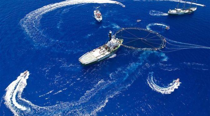 Protection du thon rouge en Méditerranée et responsabilité pénale de Greenpeace