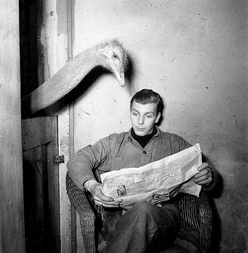 Ostrich reads newspaper of caretaker by National Archief