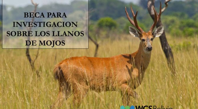 CONVOCATORIA BECA PARA INVESTIGACION SOBRE LOS LLANOS DE MOJOS
