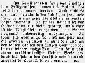 19160220_Gemüsegarten_232