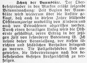 19160430_Baumblüte_297