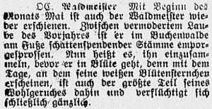 19170429_waldmeister_15