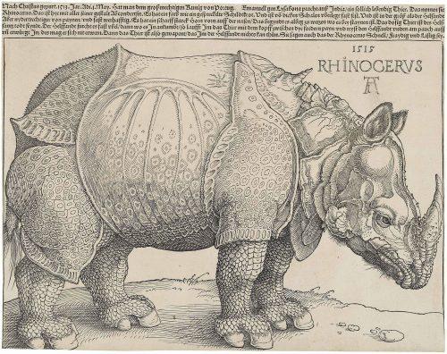Rinoceronte de Alberto Durero, 1515. Fuente: https://es.wikipedia.org/wiki/Rinoceronte_de_Durero#/media/File:Dürer%27s_Rhinoceros,_1515.jpg Licencia: Dominio Público.