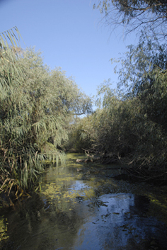 accès à Taraschina