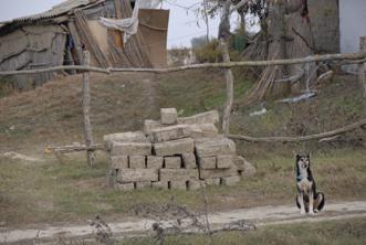 chien devant un tas de briques crues