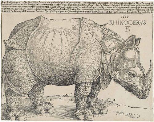 Albrecht Dürer, Rhinocéros, 1515