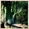 """"""" Mon cher Baobab"""""""