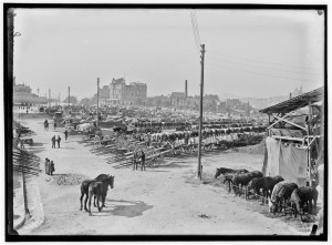 Le campement de la 16e compagnie du Train sur le plateau Saint-Charles, 1914. Edouard Cornet. Archives de Marseille AMM 115Fi 1390