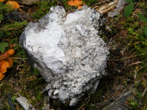Stein mit Mörtel am Ort des Fort Nicolo.