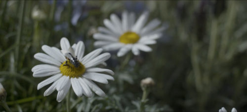 Screen caption from an episode of Black Mirror figuring a robot bee on a flower