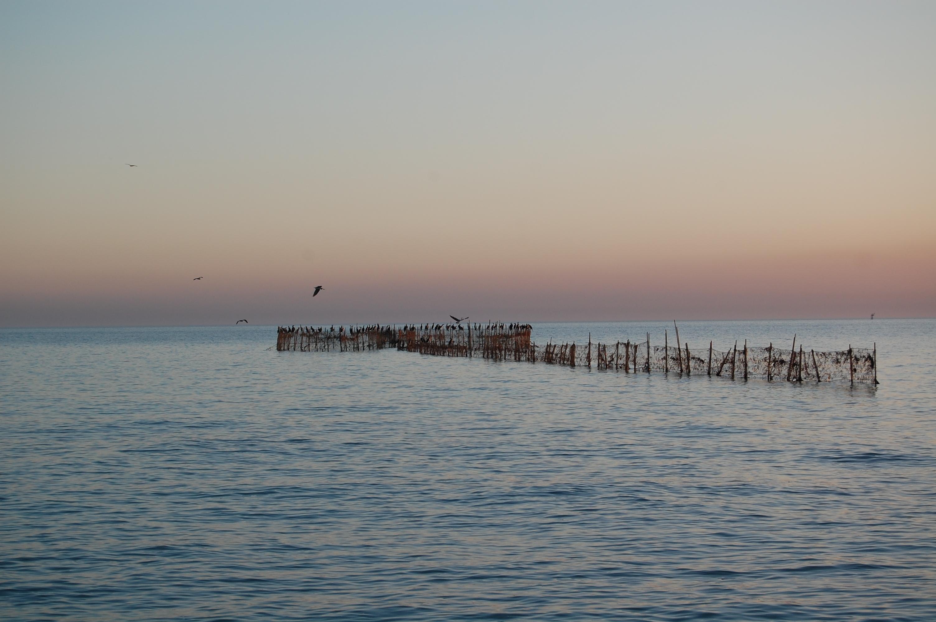 Fig. 4 : piège à poissons (hadrah) utilisé à l'époque contemporaine sur les bords de l'île de Faïlaka (J. Bonnéric 2007)