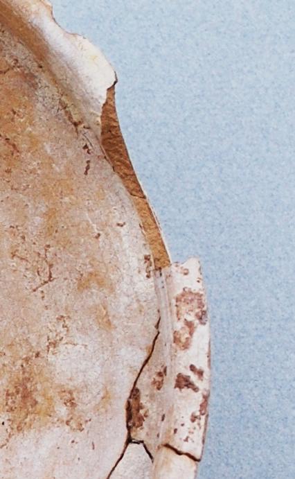 Fig. 2 : vue de la pâte de l'assiette hellénistique glaçurée OBJ-FOR-09-7013-7014 : granulométrie plus épaisse et pâte plus ouverte (S. Alami-Viguié 2012)