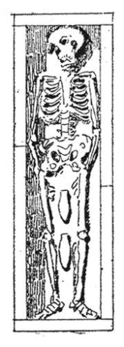 Figure 1. Dessin d'un squelette découvert dans un antique cimetière chrétien de Lamta (Tunisie) en 1882.