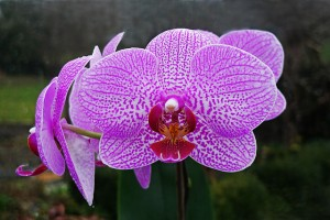 https://commons.wikimedia.org/wiki/File:Orchideen.jpg?uselang=de