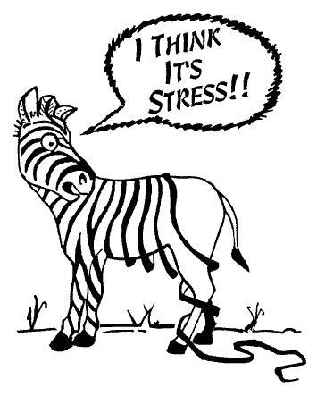 Stress-ZebraStripes