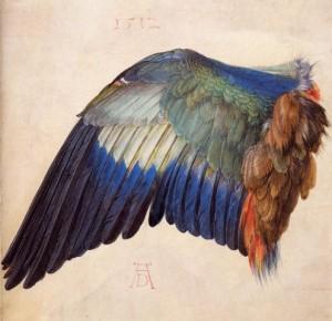 durer-1512-aile-de-geai-bleu
