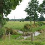 Ruisseau de la Richardais (Milly, 50), Août 2013. Cliché 125C