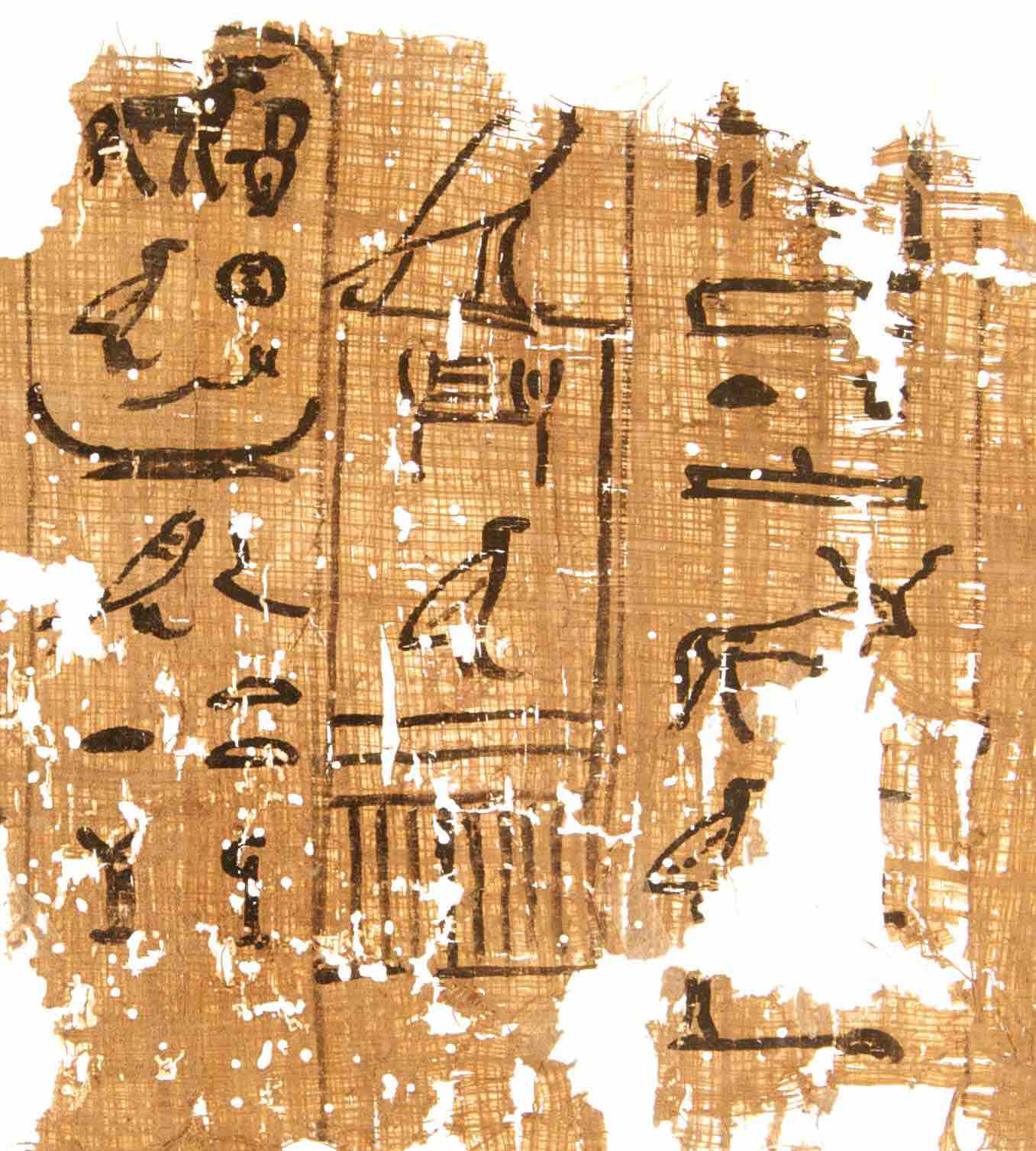 Fig. 7 - Fragment de papyrus portant une date du règne de Cheops