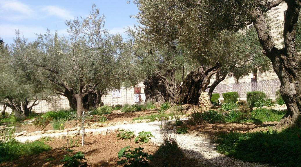 Olivengarten Ölberg 2