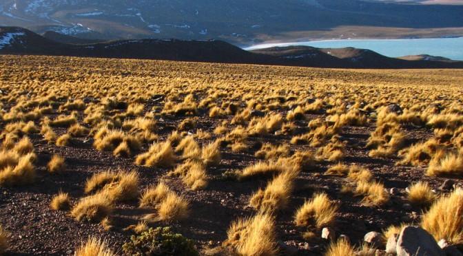 """Pajonal con la Laguna Verde al fondo (Potosí - Bolivia)"""""""
