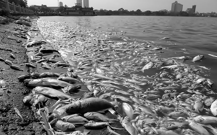 Pollution_poissons_morts