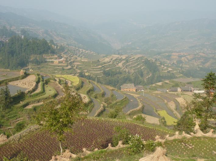 Terrasses à Tang'an