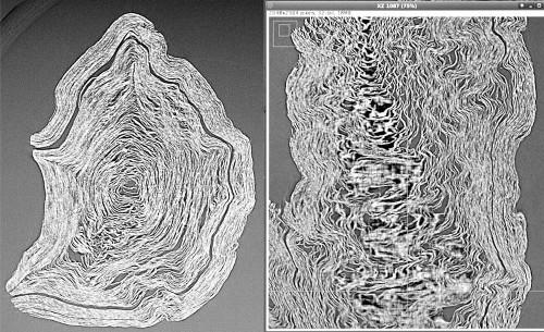 Deux scans en coupe du PHerc.Paris.4 : à g., une coupe horizontale, à dr., une coupe verticale montrant la déformation des spires, à l'origine cylindriques. Clichés © Bibliothèque de l'Institut de France, Paris, et V. Mocella et al. ; ESRF.