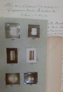 Manuskript Machs mit Fotos