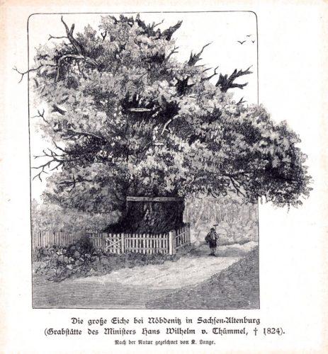 eichenoebdenitz_holzstich_museumburgposterstein