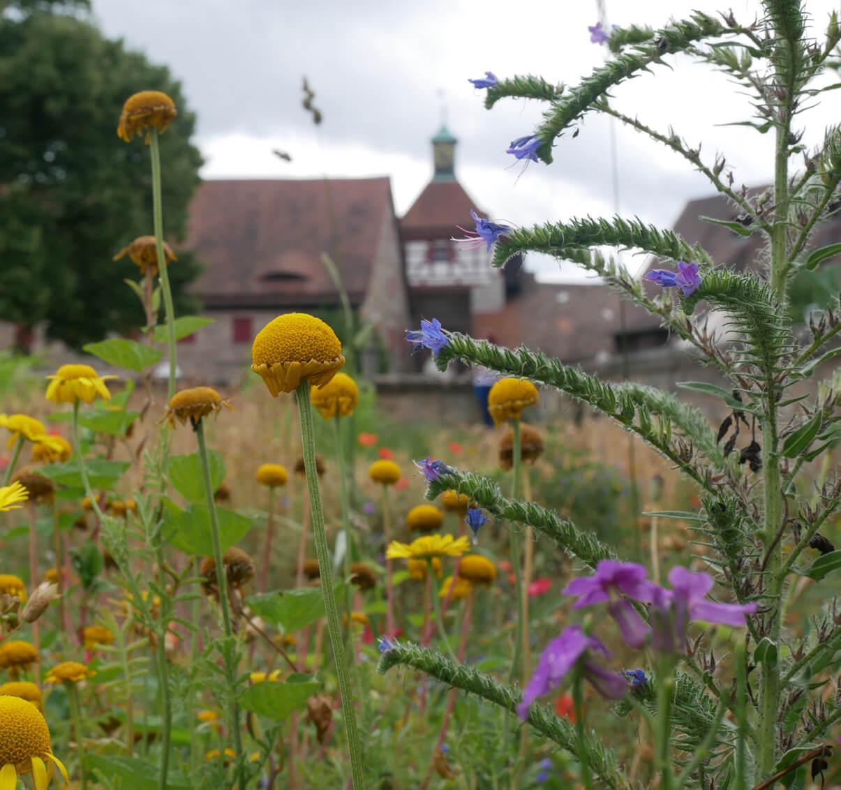 Lustgarten Cadolzburg