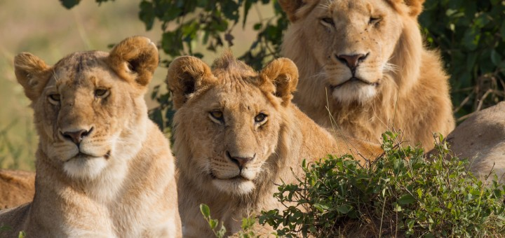 Continuity and Change in Kenyan Ecotourism Practices – Mambo !