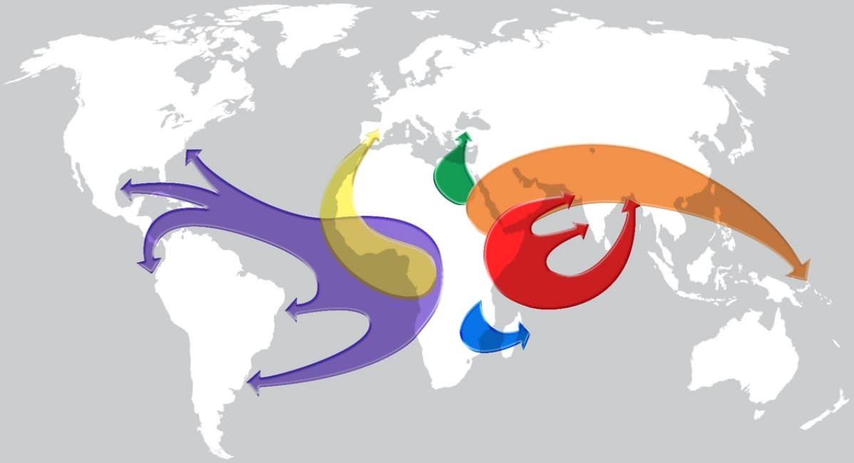 Diáspora africana global (Sheila S. Walker)