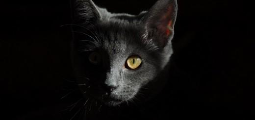 cat-778315_960_720_male96_pixabay