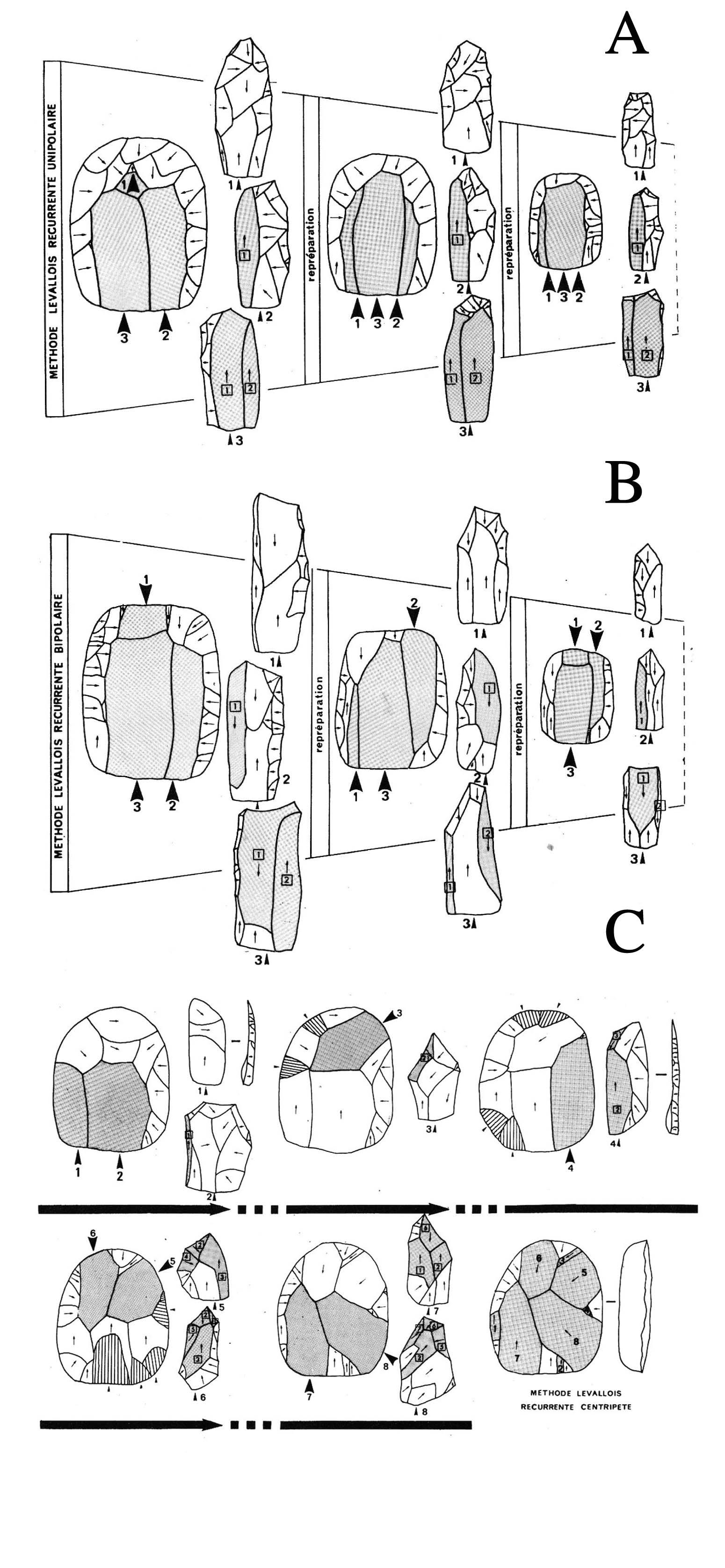 Figura 2: Esquema de trabajo de los métodos Levallois recurrentes unipolares, bipolares y recurrentes. Cada casilla marca una repreparación de la superficie de explotación del núcleo. Constatar que en el Levallois recurrente centrípeto, esta repreparación no existe per se, ya que la extracción de las lascas autoentretienen las convexidades. Las extracciones están numeradas (2).