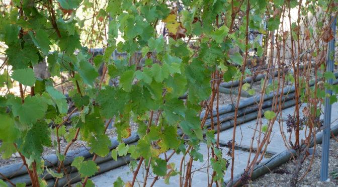 """Projet """"Histoires de vies, de vignes et de vins"""" – 1er déplacement à Sancerre !"""